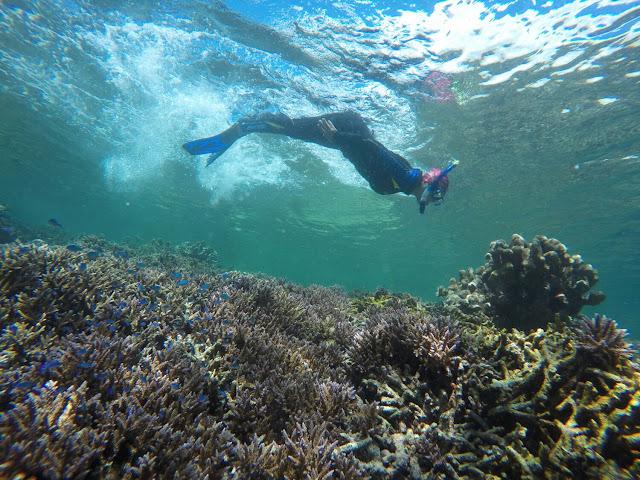 Open Trip menjelajahi keindahan underwater di Kepulauan Derawan