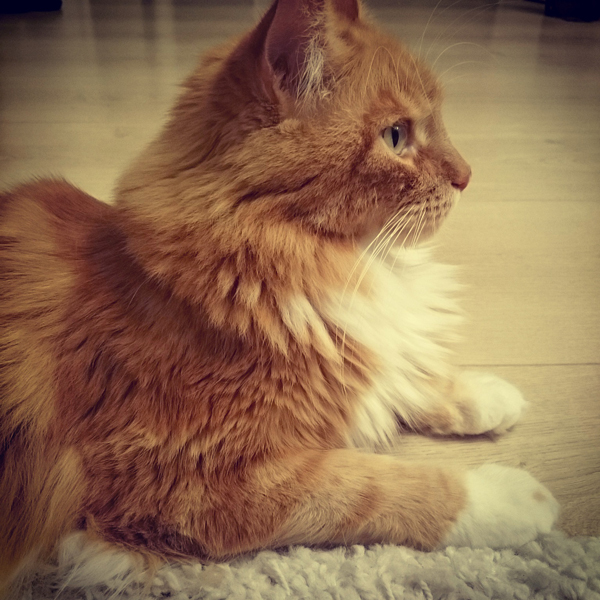Pixel Le Chat sur Instagram