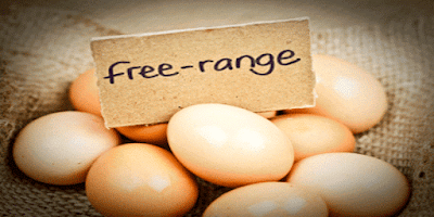 http://www.khabarspecial.com/big-story/health-special-study-finds-people-believe-free-range-eggs-tastier-nutritious-safer/