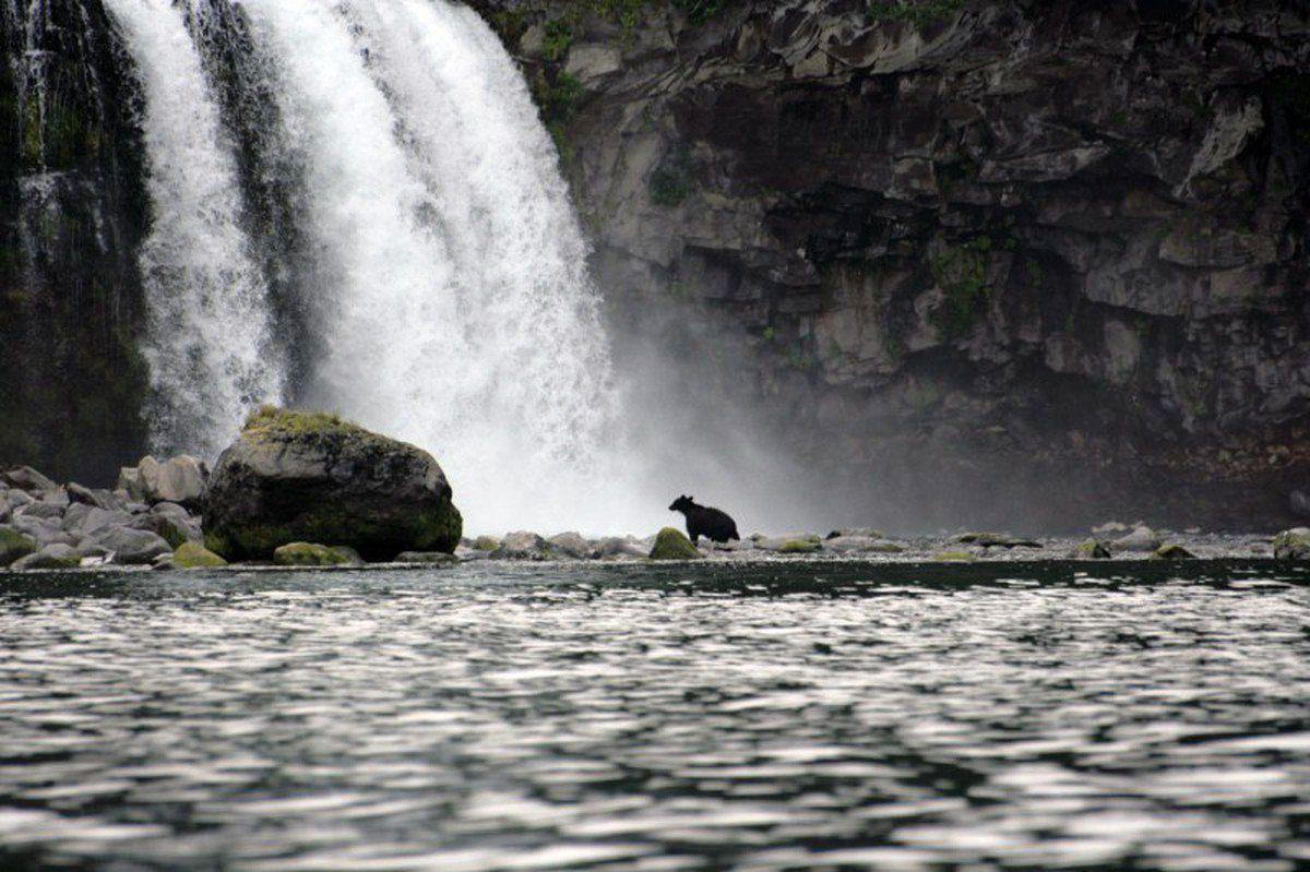 国後島のソコボイの滝のヒグマ