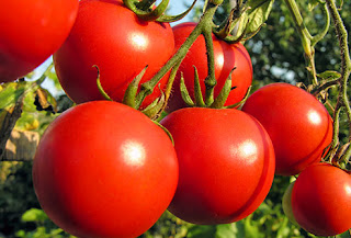 7 Reasons Why You Should Eat Tomatoes