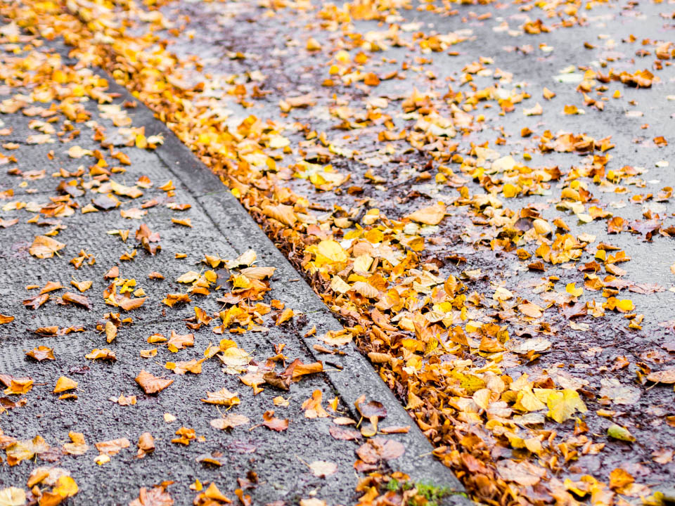Colourful yellow, orange and brown autumn leaves - Syksyn värikkäät keltaiset, oranssit ja ruskeat lehdet