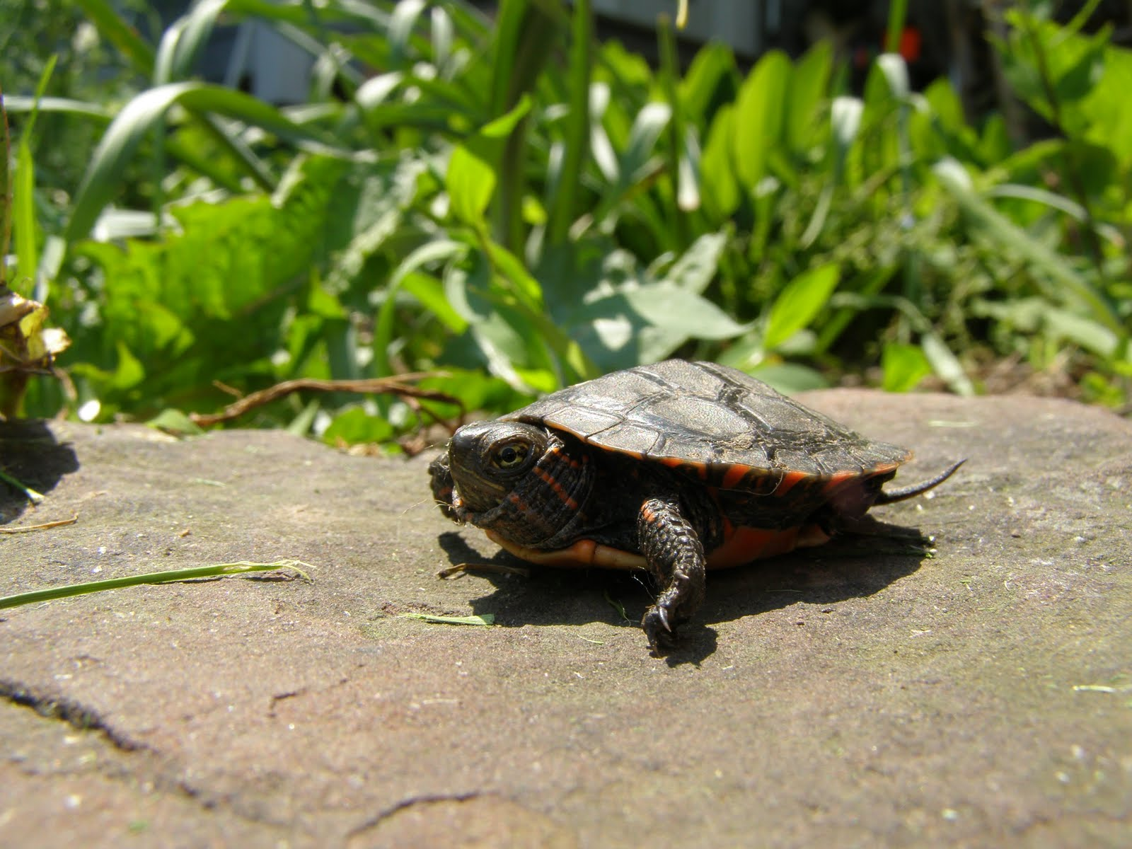Turtle funny - photo#48