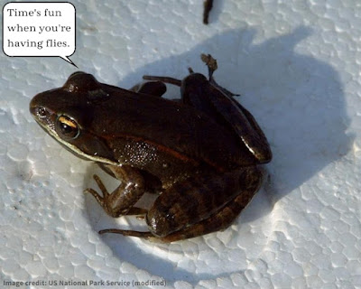 Creatures living in extreme cold have been given unique abilities to survive. A few kinds of frog are able to freeze solid and still come back.