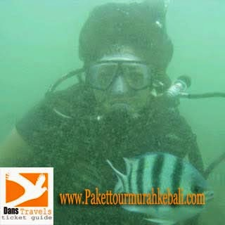 Watersport Tanjung Benoa - Diving in Bali