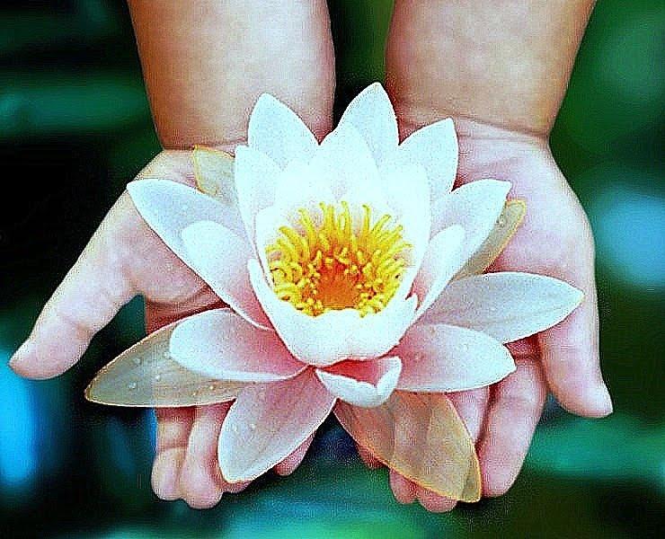 Mágico Despertar La Flor De Loto