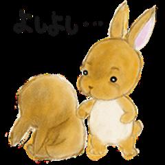 rabbit netherland dwarf. Cute USAGI!
