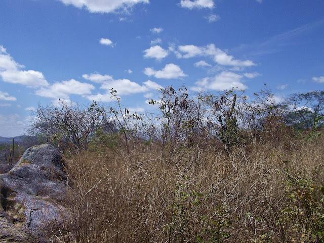 Conhecendo um pouco de Mimoso agreste de Pernambuco