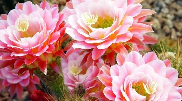 Cara Membuat Bunga Mawar dari Kantong Plastik Warna Warni Mudah dan Praktis