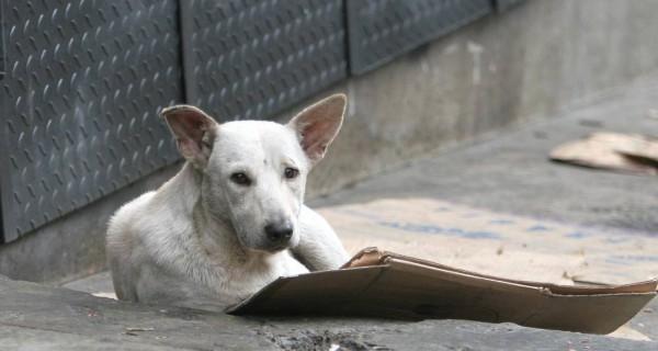 ¡QUE DOLOR TAN GRANDE! Abandono masivo de mascotas en Venezuela