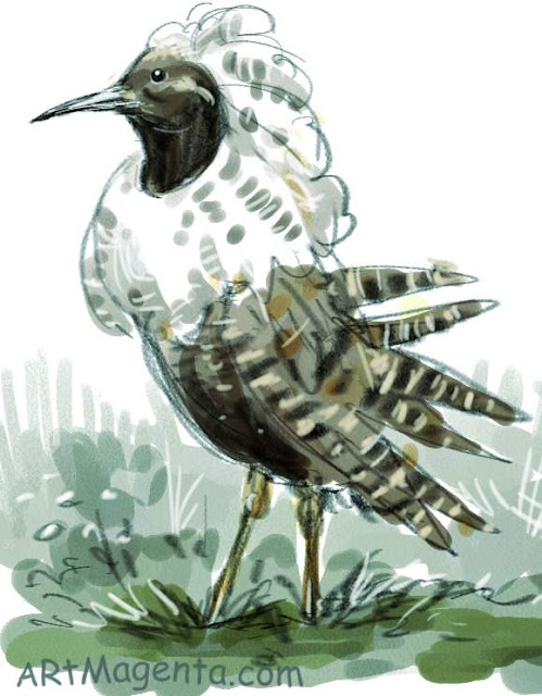 Ruff is a bird drawing by artist and illustrator Artmagenta