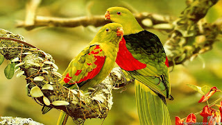 parrot images and hd photos