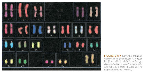 Karyotype of human chromosomes.