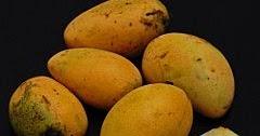 mangga-pari,www.healthnote25.com