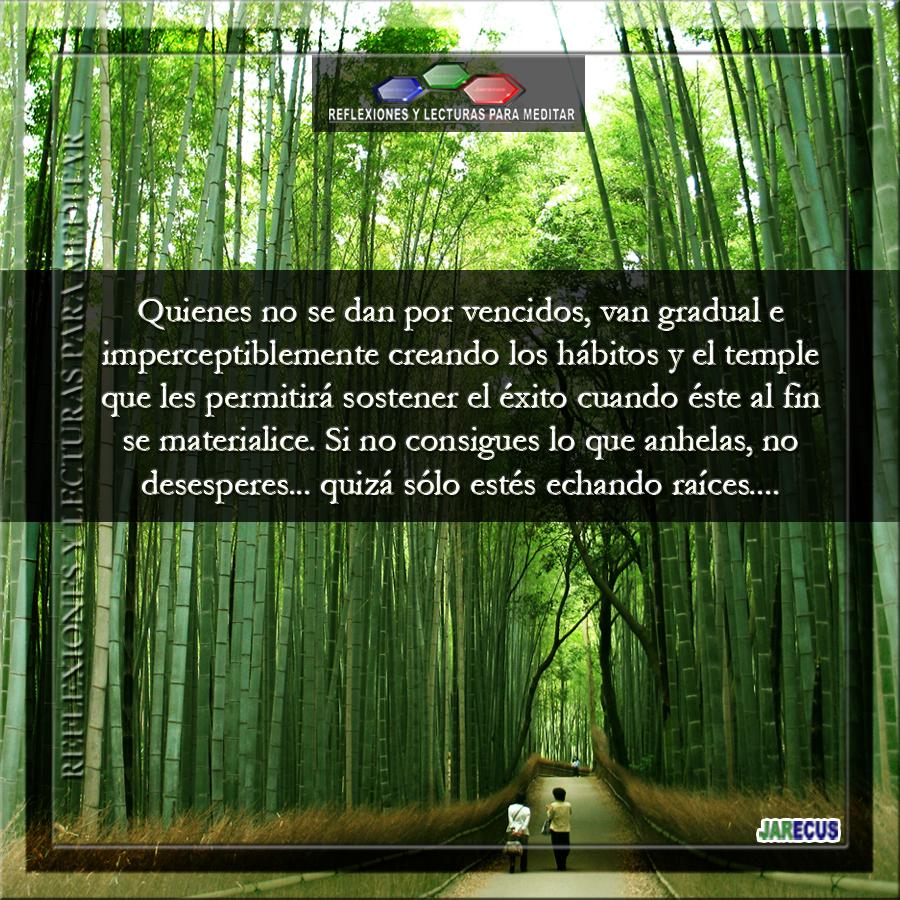 Bambú japones - Reflexiones y Lecturas para Meditar
