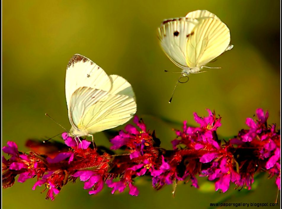 Pictures Of Real Flowers And Butterflies | Wallpapers Gallery