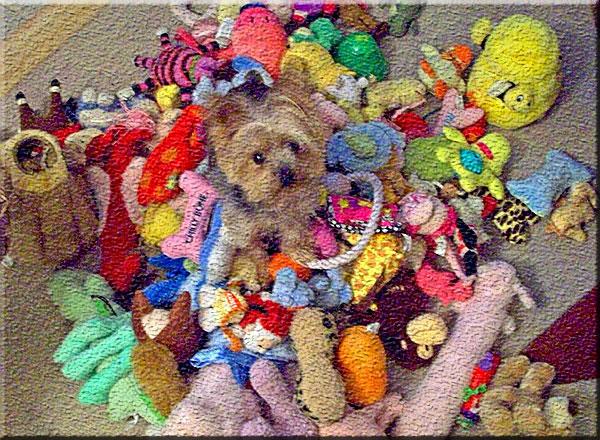 Reciclando brinquedos para cachorro