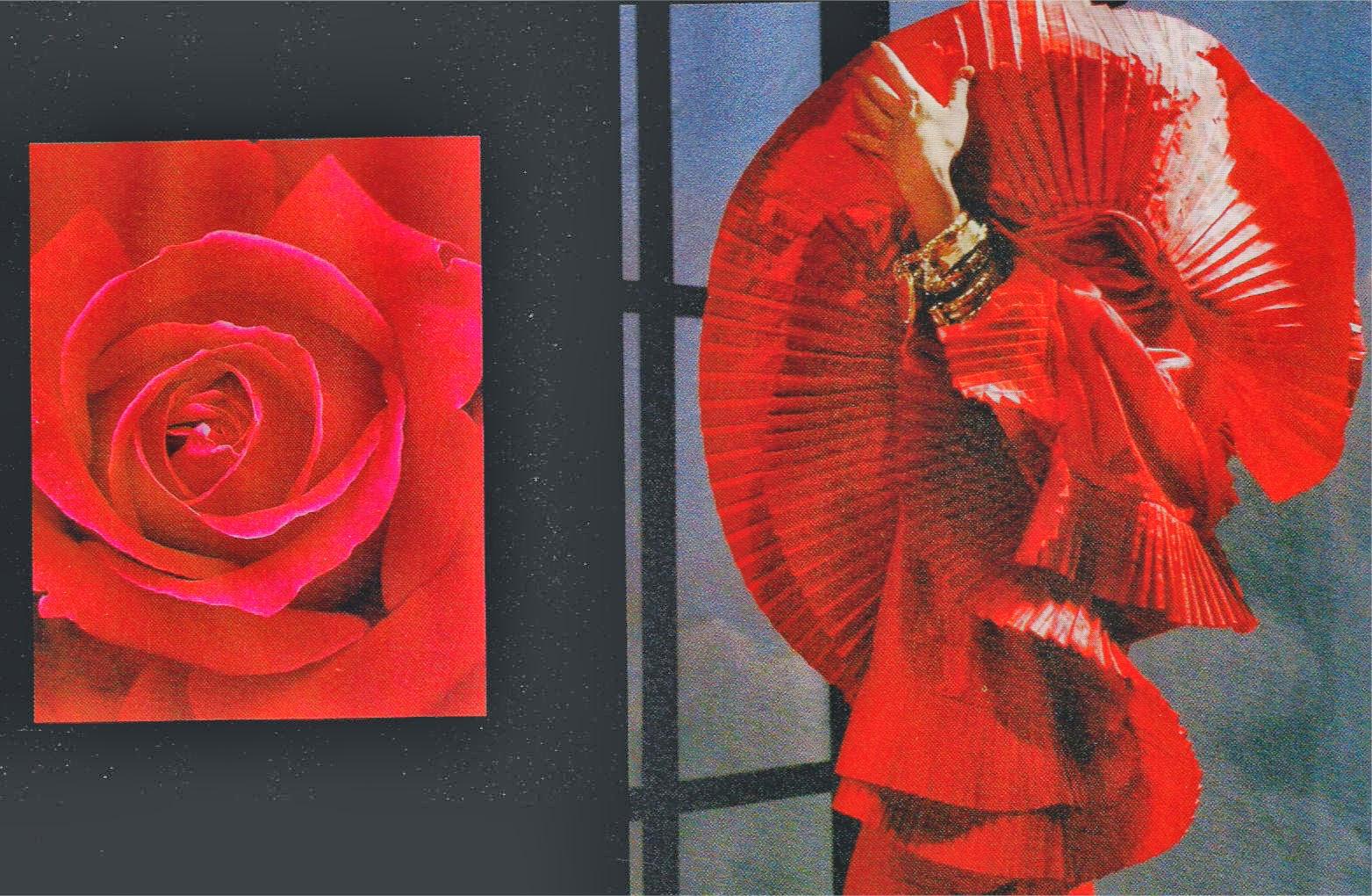 Rose Da Taglio Rifiorenti nel nome della rosa: rose & celebrità