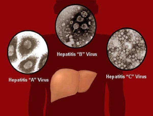 Công dụng của nấm linh chi với bệnh viêm gan