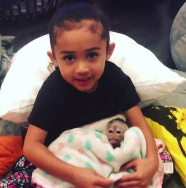 chris brown bought a monkey for her daughter
