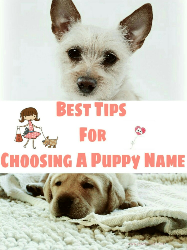 When you get a new puppy, deciding on a name can be daunting.  Visit us to read the best tips for choosing a puppy dog name.