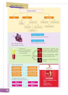 6. Sınıf Fen Bilimleri Ders Kitabı Cevapları Sevgi Yayınları Sayfa 66