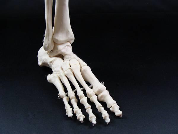 Foot Circumference Shoe Size
