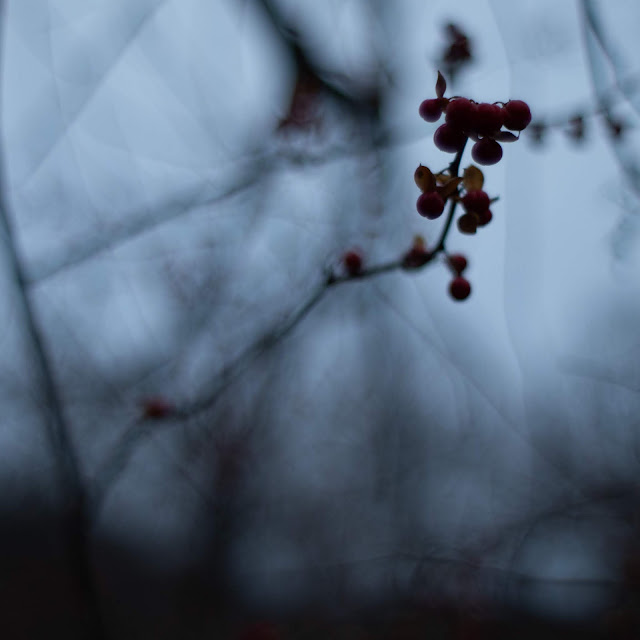 A small group of red berries against a dark grey sky and branches.