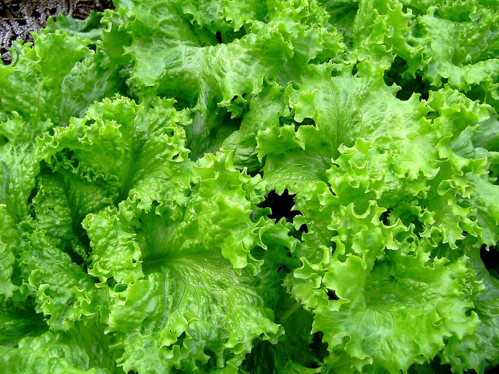 Plantio direto uma nova forma de sustentabilidade no campo 9