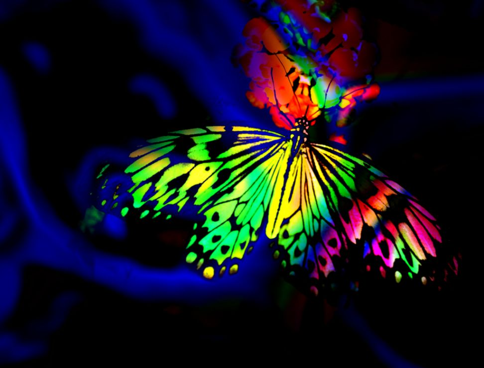 Butterfly Hd Abstract Wallpaper
