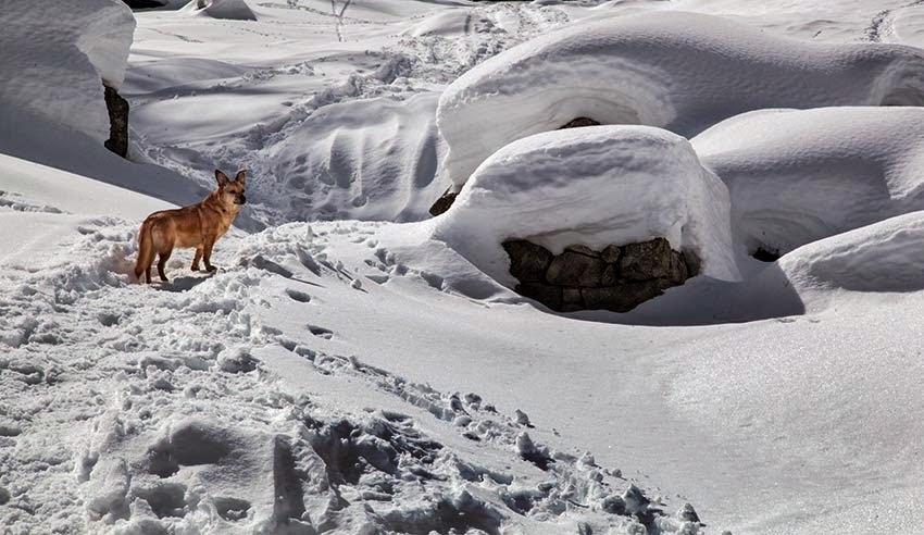 ciaspolata Pecetto lago delle fate Crocette alpe La Piana