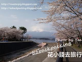 河口湖櫻花