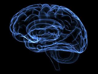 """Foto: Dreamstime / Archivo El cerebro humano de algunas personas mayores es capaz de mantener la """"eterna juventud"""". En busca del tratamiento que pueda prevenir la pérdida de memoria o incluso la enfermedad de Alzheimer, los científicos estadounidenses están estudiando las razones de este fenómeno. En el marco de su estudio, publicado en el """"Journal of the International Neuropsychological Society"""", los expertos de la Universidad de Chicago revelaron que, bajo ciertas condiciones, un selecto grupo de personas mayores de setenta años,conocidos como los """"SuperAgers"""", gozan de una anatomía cerebral especial, por lo que pueden pensar y recordar incluso mejor que"""