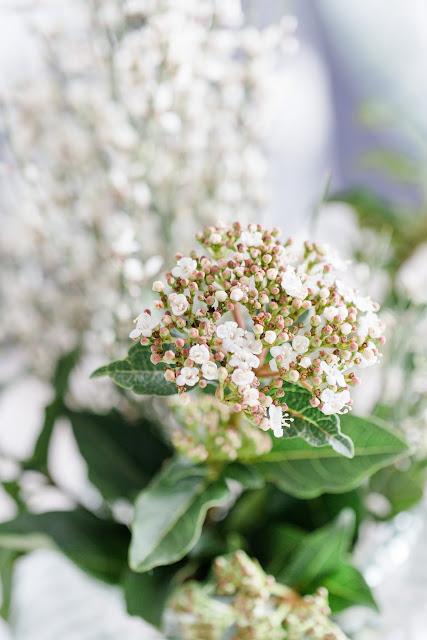 Friday Flowerday, Schneeball und Ginster, Pomponetti