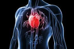 How to prevent the risk factors for coronary heart disease