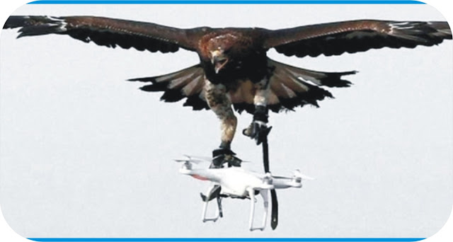 France trains eagles to detect drone