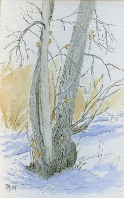 art sketch pen watecolor plein air nature tree