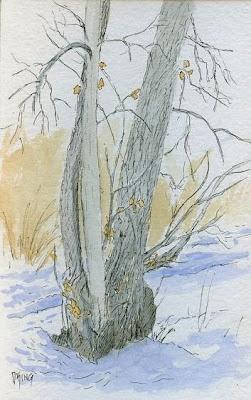 art sketch pen watecolor plein air nature tree