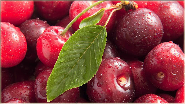 wallpaper buah cherry segar