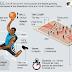 Teknik Permainan Bola Basket