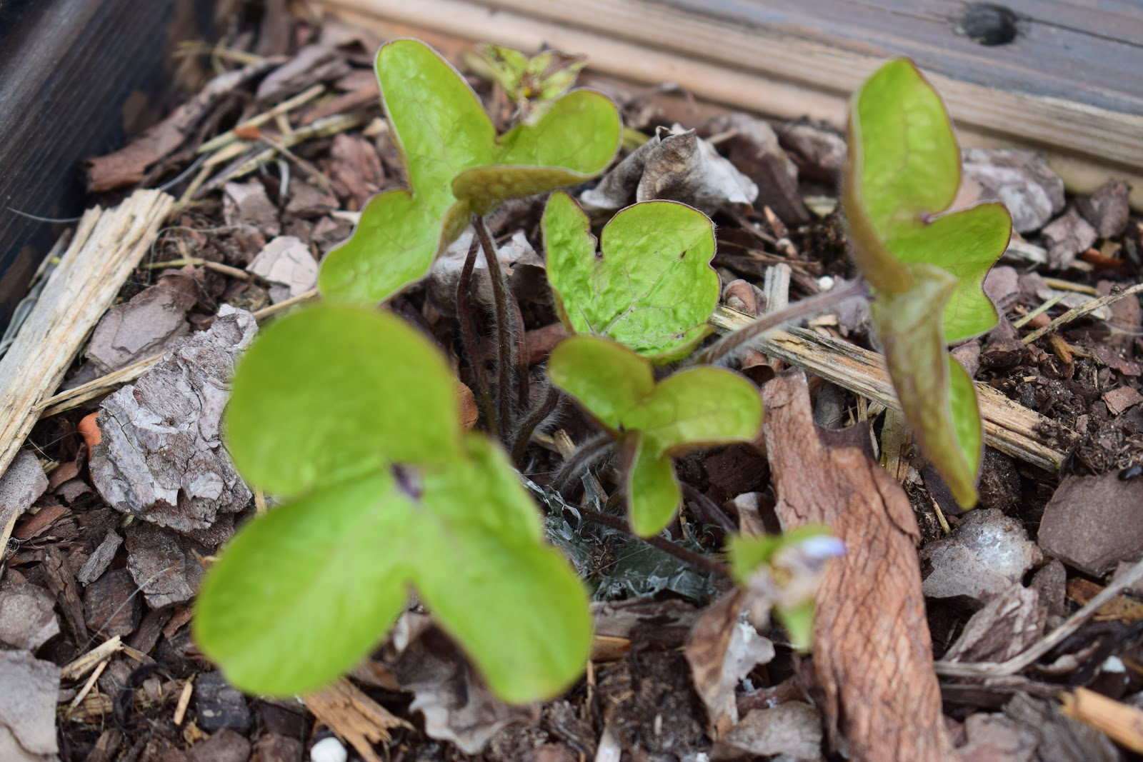 Ruusukumpu: Pihalla/patiolla.