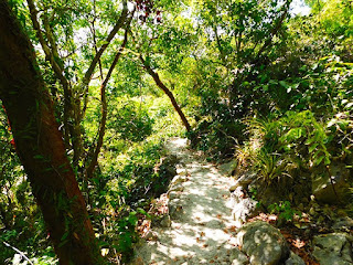 nature trails, sky trail, #payabay, #payabayresort, roatan, nature, magic of paya, paya bay resort,