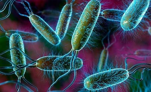 Bakteri E Coli