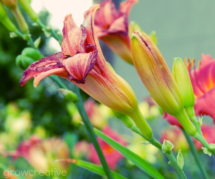 Lilly Flower Photography