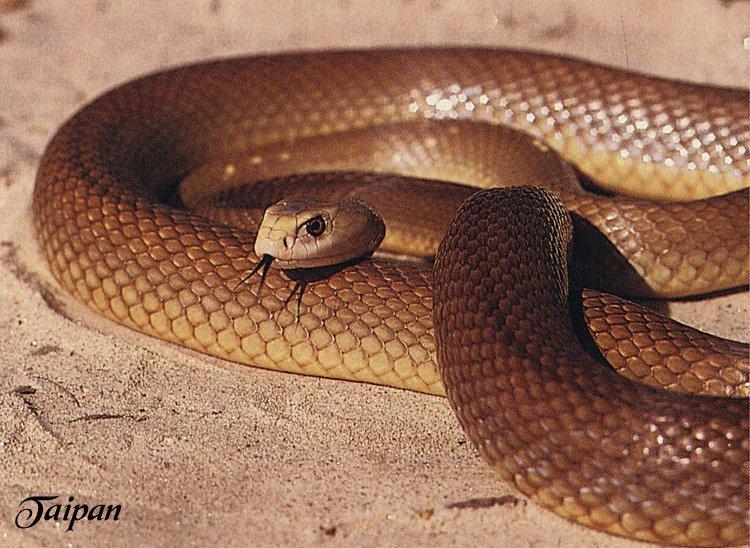 World's Deadliest Animals : Snake | Smashing Net