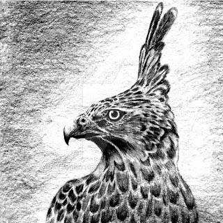 burung elang animasi