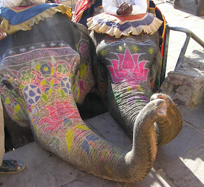 Jaipur elephants
