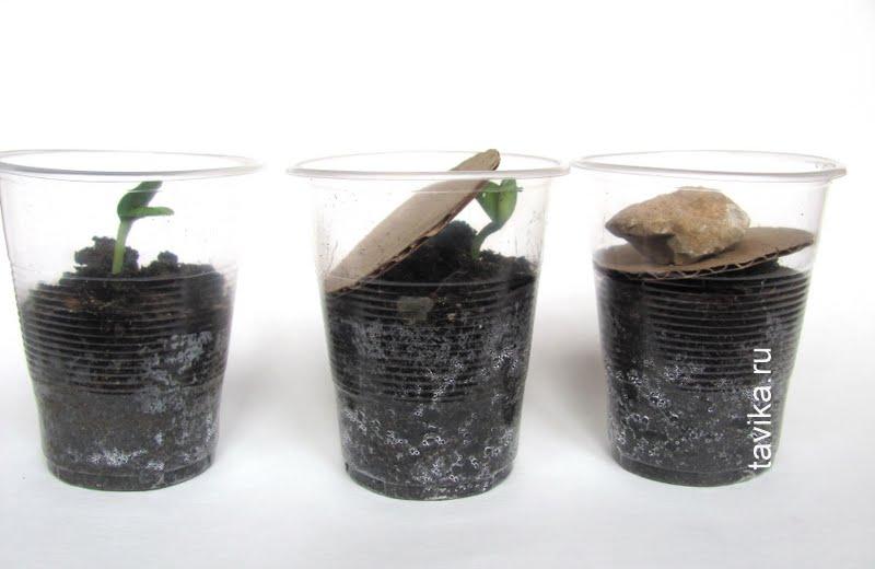 опыты и эксперименты с растениями для детей