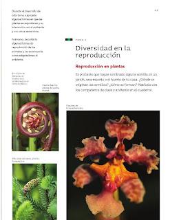 Apoyo Primaria Ciencias Naturales 4to Grado Bloque II Tema 1 Diversidad en la reproducción