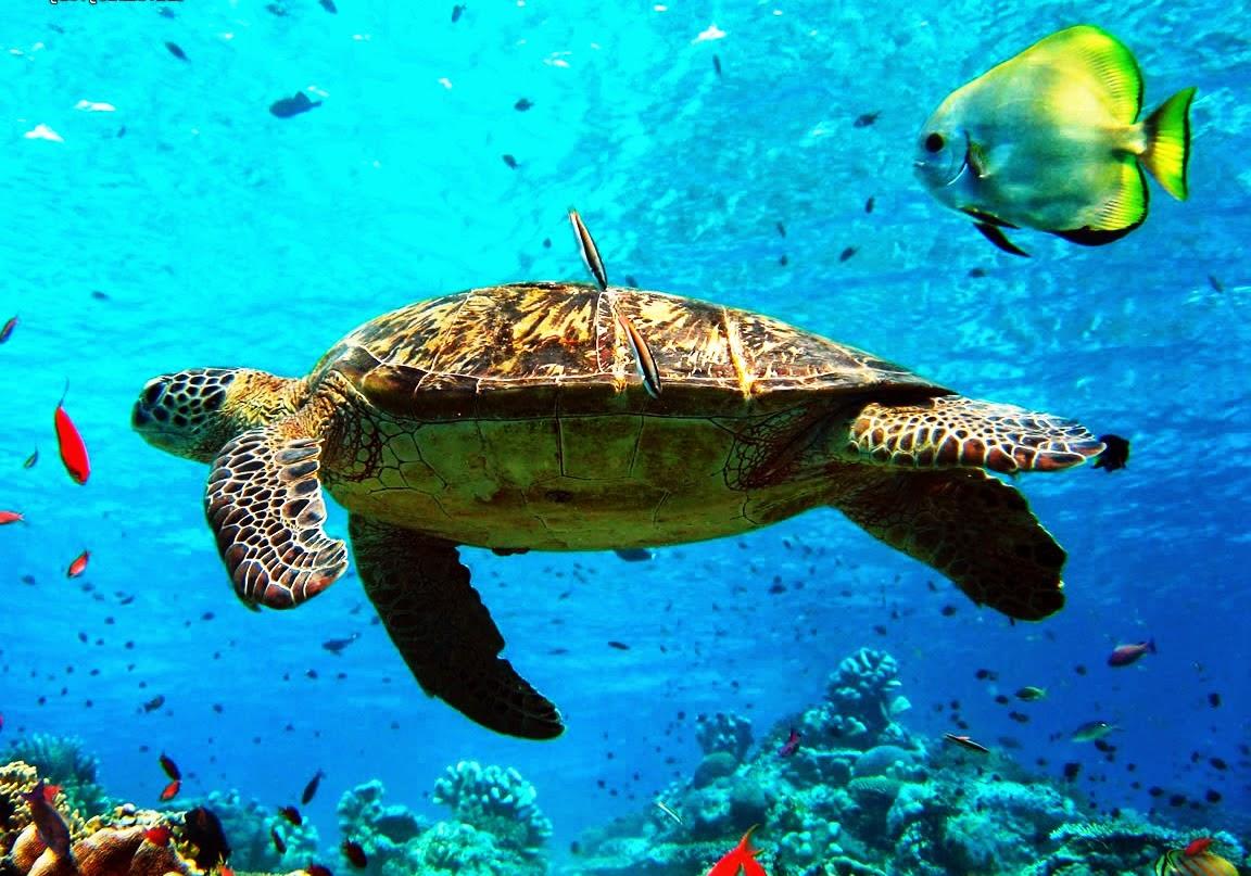 Snorkeling, Andaman Islands